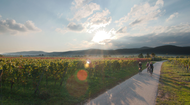 rad-bett-bike-gaestehaus-buchert-pfalzcard-pension-pfalz