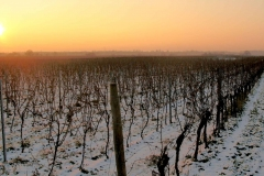 deutsche-weinstrasse-winter-wein-buchert